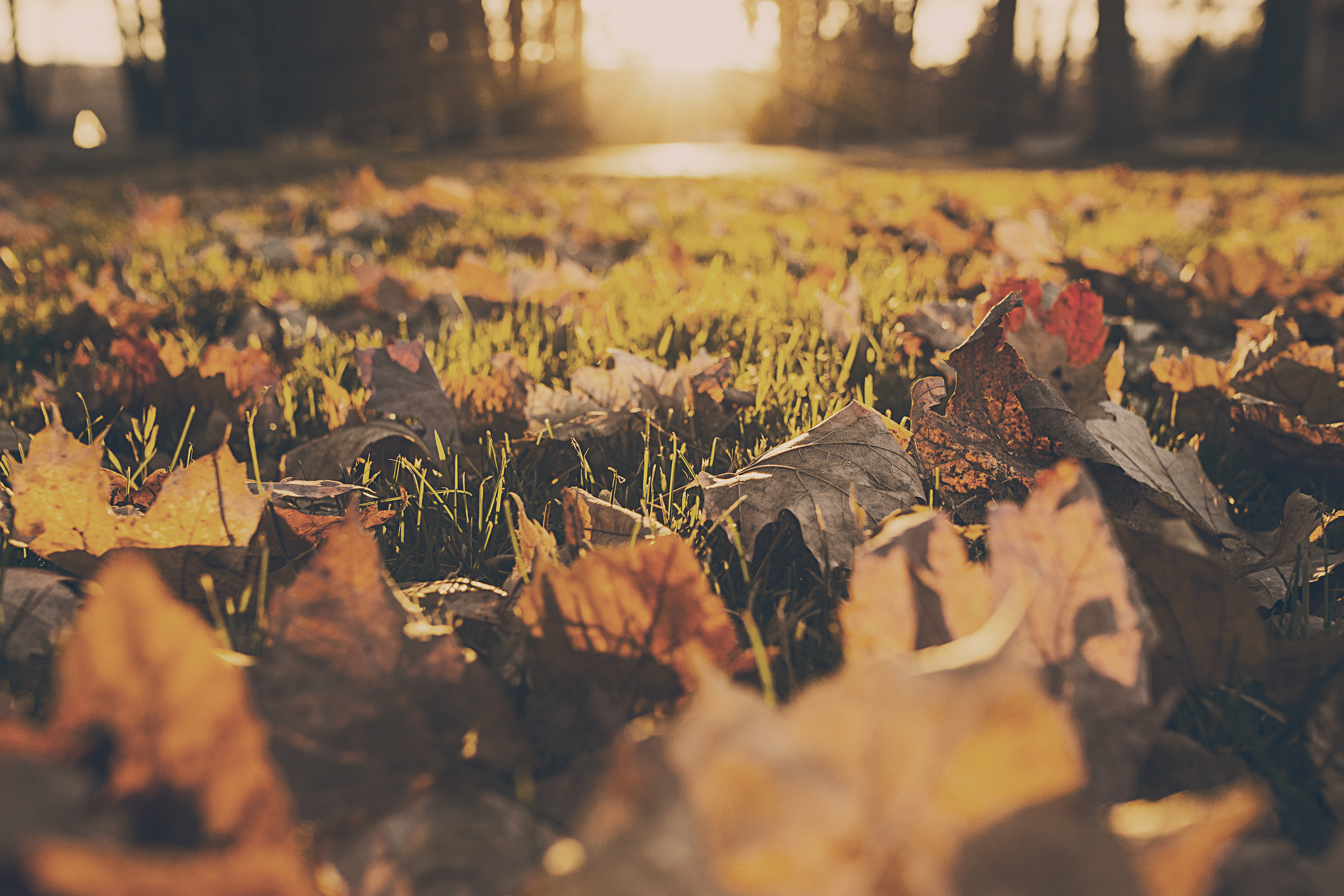 Lawn Care Tips For The Fall