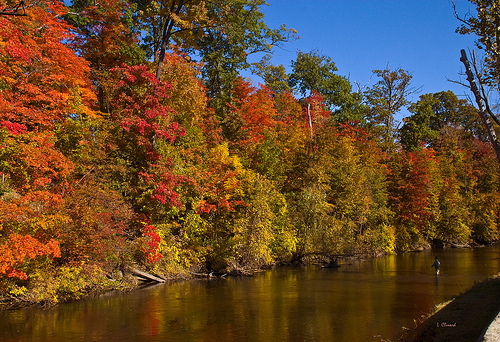 Summer drought spells causes Fall Colors to be less vibrant.
